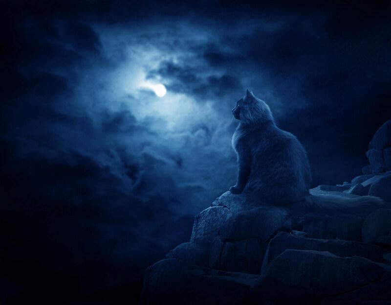 кошка призрак, привидение